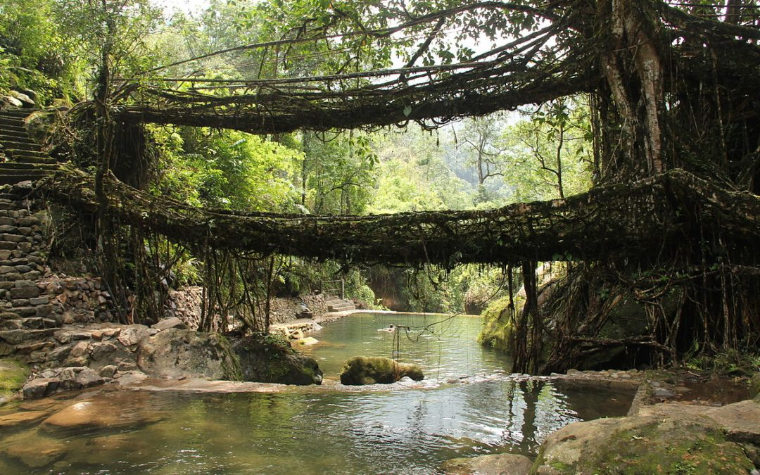 Root bridges that are living routes in Meghalaya