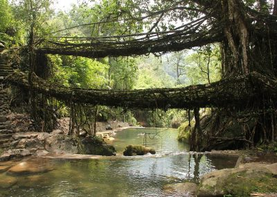 Double Decker Living Root Bridge