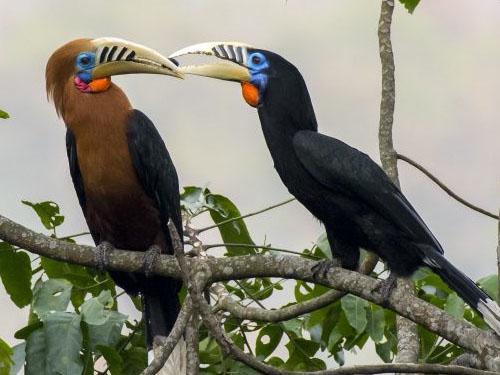 Assam Holidays Birding Tour – 05