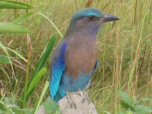 Assam Holidays Birding Tour – 02