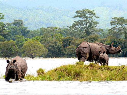 Assam Holidays – 06