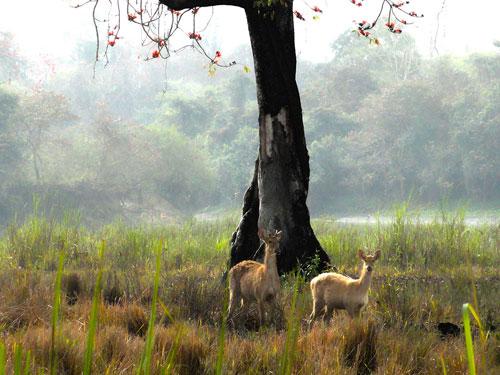Assam Holidays – 19